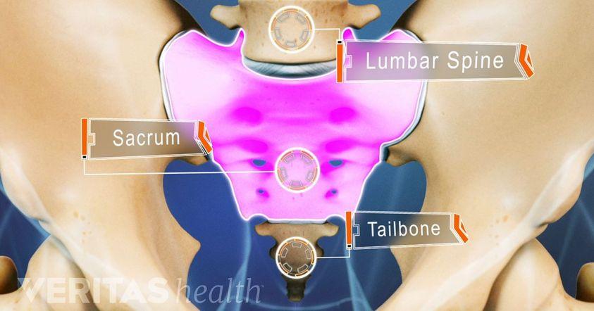 Sacral Definition Anatomy - Anatomy Drawing Diagram