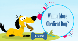 want obedient dog
