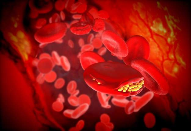 red cells and fat