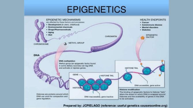 Epigenetics part 1