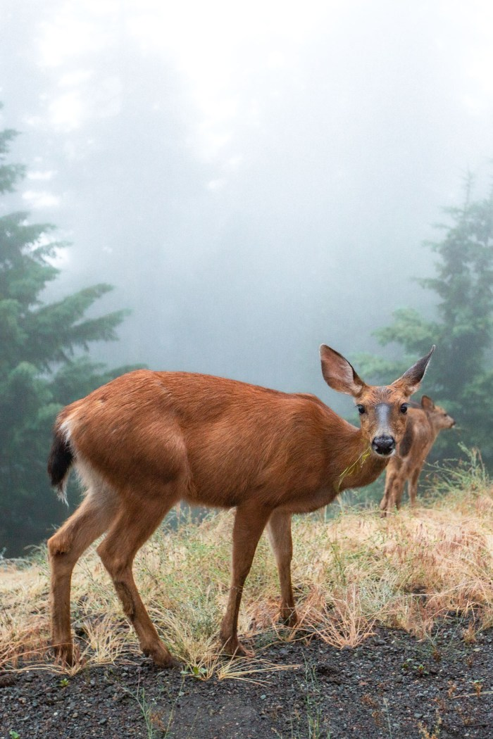 9 (Stunning) Hikes in Olympic National Park