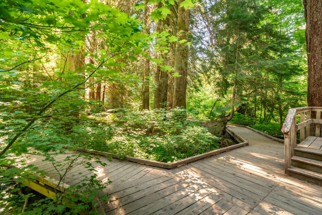 Grove of the Patriarchs  Mt. Rainier National Park