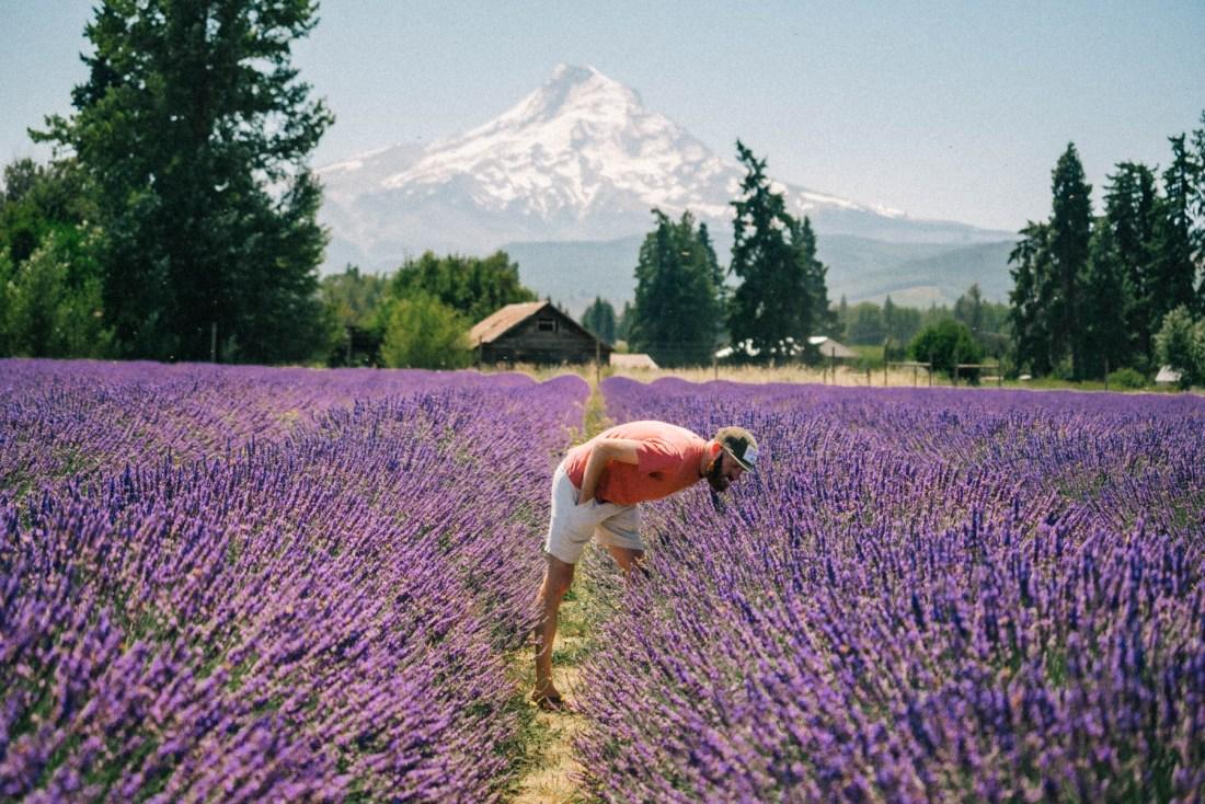 Oregon lavender farms