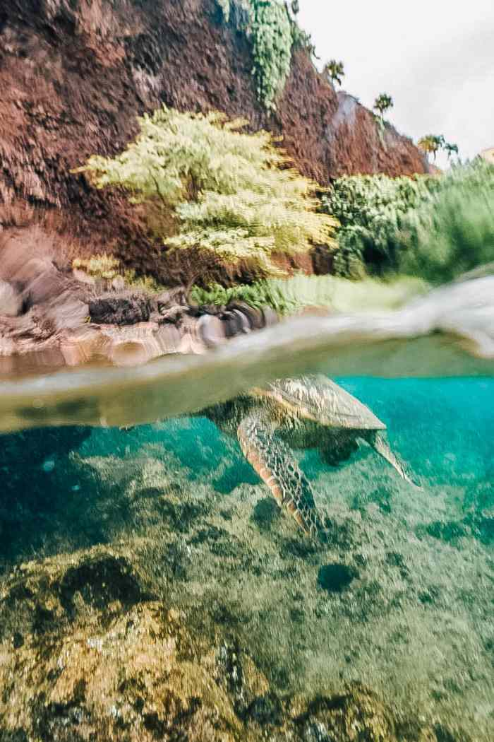 The 10 Spots You're Guaranteed to Find Sea Turtles on Maui
