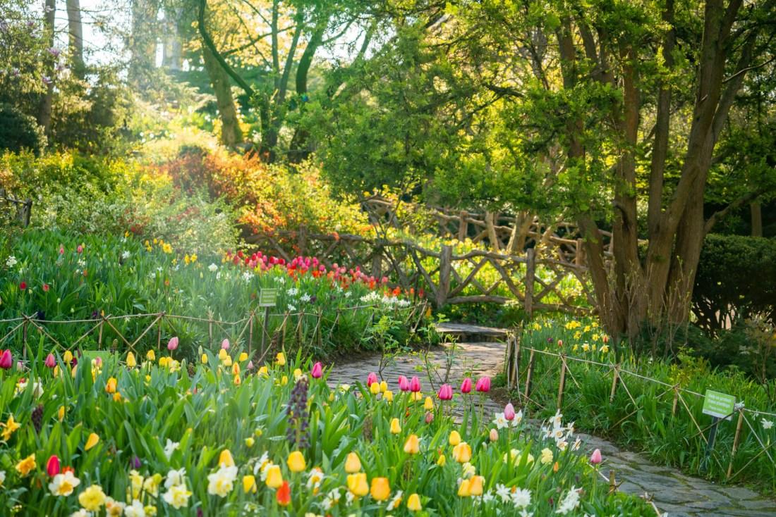 Spring in Central Park NYC Shakespeare Garden