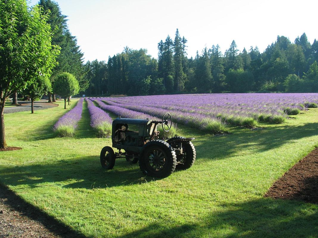 best lavender farms in Oregon
