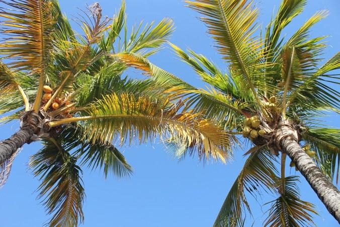 palm-1824505_960_720