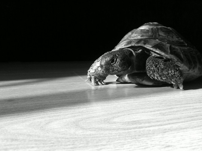 tortoise-644163_960_720