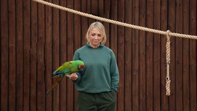 parrot-1760855_1920