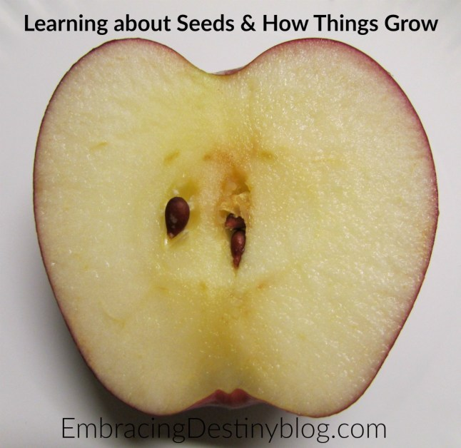Learning about seeds and how fruits & vegetables grow with Christian Kids Explore Biology. embracingdestinyblog.com