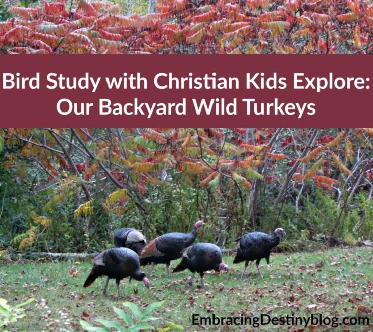 Learning about birds with Christian Kids Explore Biology at embracingdestinyblog.com
