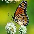 7 Plants & Flowers that will attract butterflies to your yard! embracingdestinyblog.com