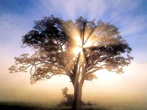 tree-of-wisdom