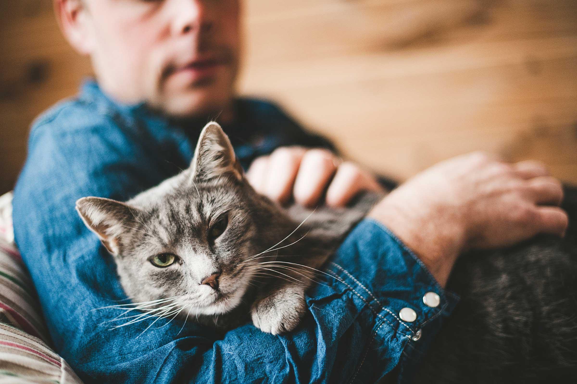 67b7a706b789 Η τροφή που πρέπει να χρησιμοποιείτε αν η γάτα σας έχει πεπτικές διαταραχές