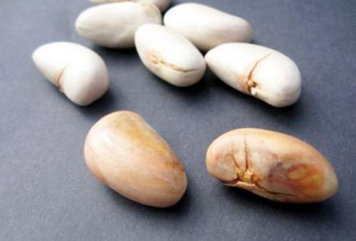 Image result for jackfruit pit