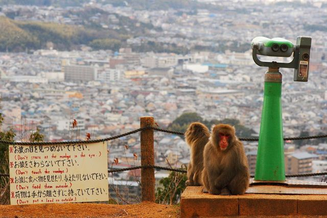 Arashiyama Monkey Park Summit with rules and view of kyoto and two monkeys
