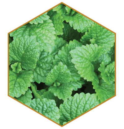 Menthol Ultra Hydrating Natural Hair Ingredient
