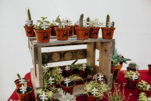 Succulents and cacti hand grown by the bride and groom are displayed as wedding favours and table escorts for wedding guests on an old beer crate.