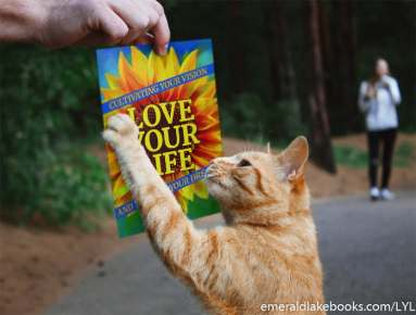 Kitty love - Love Your Life