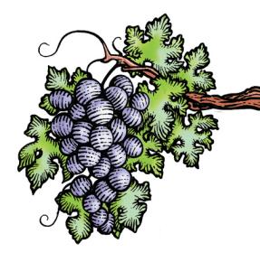 Shelter Rock Winery grape image