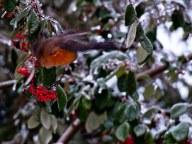 Vince Ferguson - Blurred Robin 03 - Digital Image