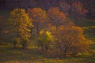 C. Vincent Ferguson - Golden Spring Trees - Digital Image