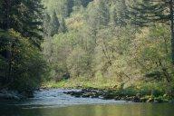 C. Vincent Ferguson - Washougal River - Digital Image