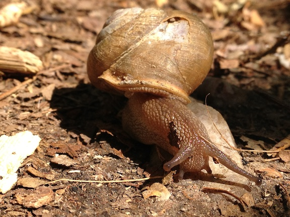 Snail-sm