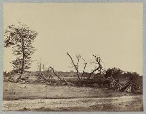 The battlefield of Cold Harbor. Courtesy of the Library of Congress.
