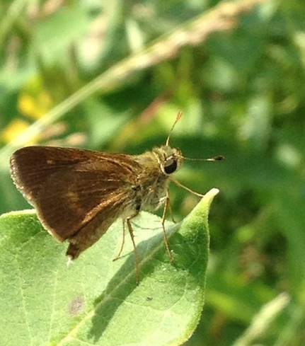 Butterfly-sm