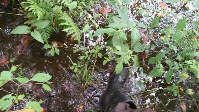 Arthur's Swamp flooded