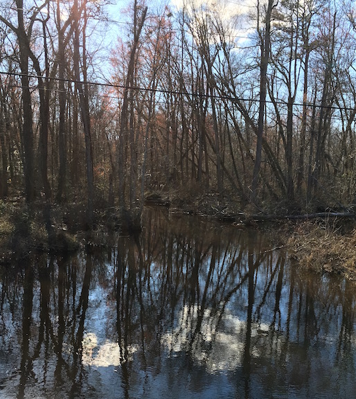 white-oak-swamp