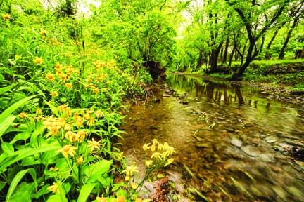 Cedar Creek flowers BUDDY SECOR