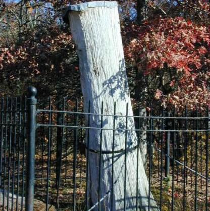 ASJ tree-nps