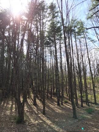 Sun over McDowell woods