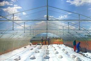 greenhouse tunnel floor ground plastic sheets, hydroponic farming, new generation emerging farmers
