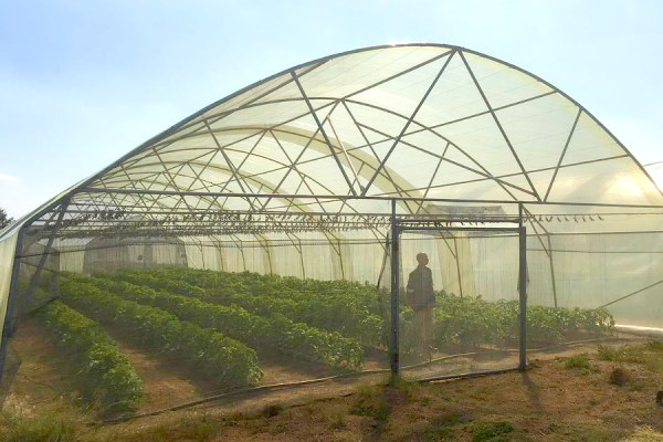 single span shade net tunnel with complete irrigation system