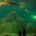 Sharks at the Adventure Aquarium