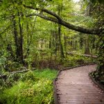 Sloans Crossing Pond Walk