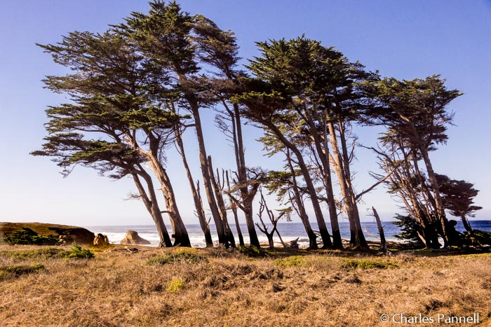 Limk to Northern California Rail Trail Offers Sweeping Ocean Views