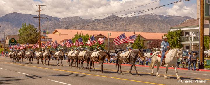 Mule Days Parade in Bishop, California