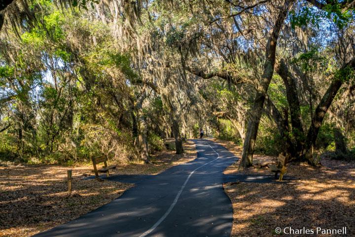 The Gulf Oak Ridge Trail