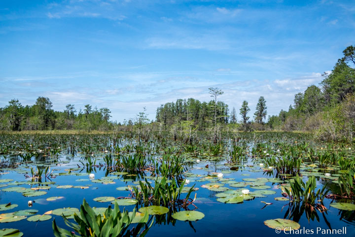 Suwannee Canal on the Okefenokee Adventures boat tour