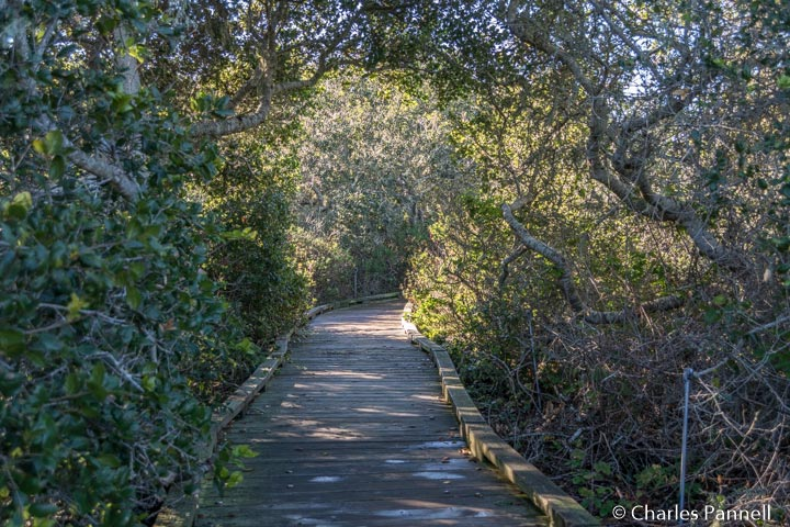 Boardwalk through the Elfin Forest