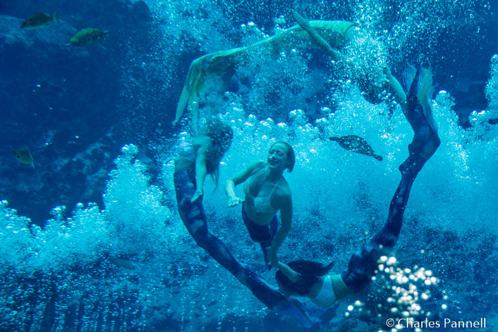The Mermaid show at Weeki Watchee State Park