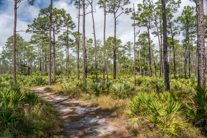 Pine flatwoods along the Kitching Creek Trail