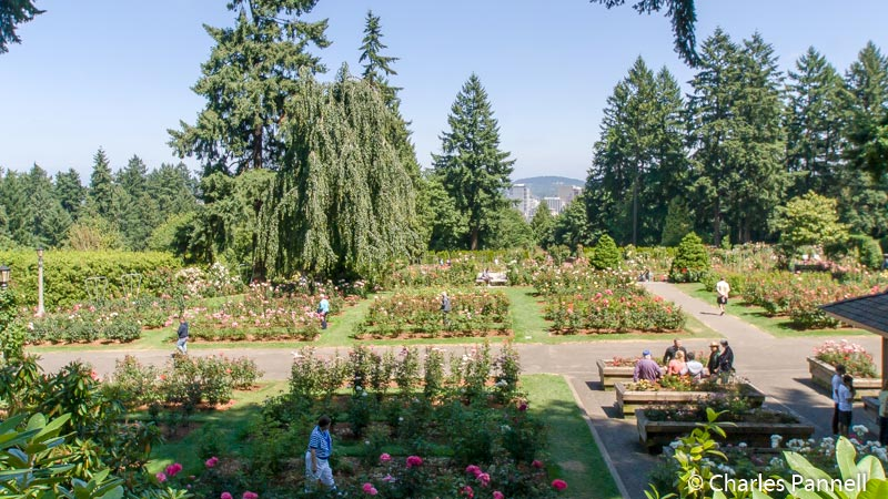 International Rose Test Garden - Washington Park in Portland, Oregon