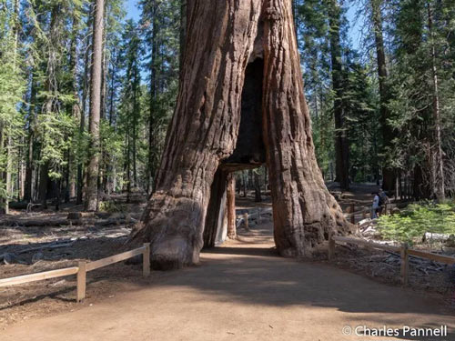 Yosemite Unveils Accessible Mariposa Grove