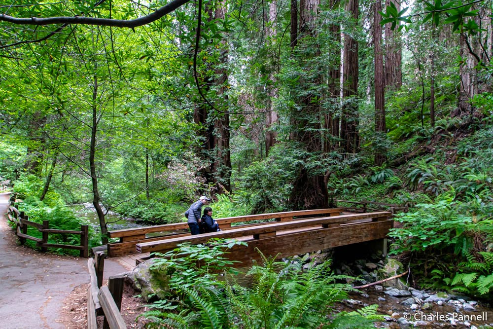 Wheelchair user and assistant crossing Bridge 3 in wheelchair accessible Muir Woods National Monument