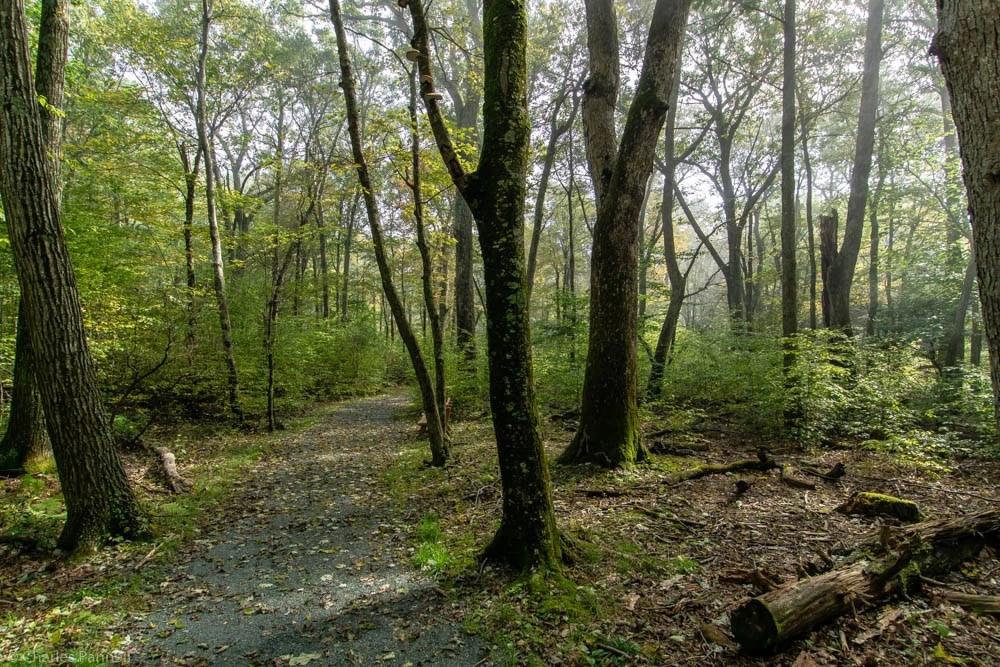 shenadoah-limberlost-trail-1